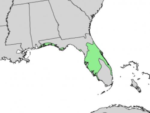 natural range of <em>Pinus clausa </em>