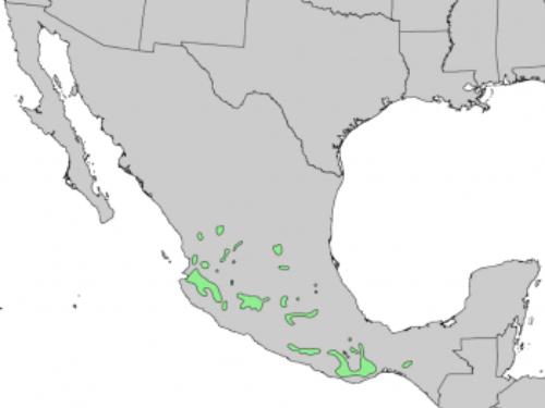 native range of <em>Pinus devoniana </em>