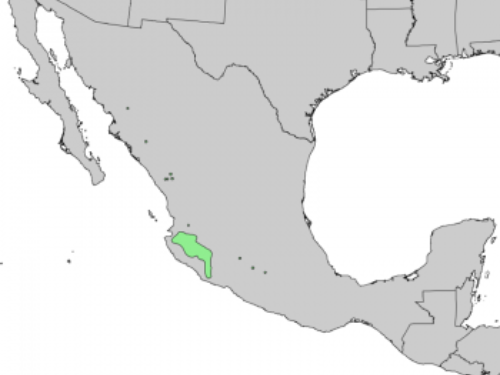 native range of <em>Pinus douglasiana </em>