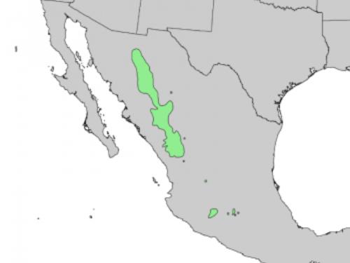 native range of <em>Pinus durangensis </em>