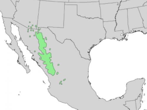 natural range of <em>Pinus engelmannii </em>