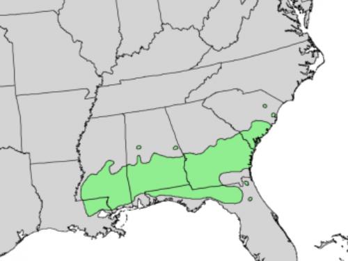 natural range of <em>Pinus glabra </em>