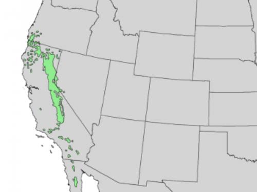 natural range of <em>Pinus jeffreyi </em>
