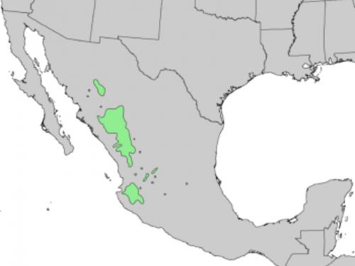natural range of <em>Pinus lumholtzii </em>