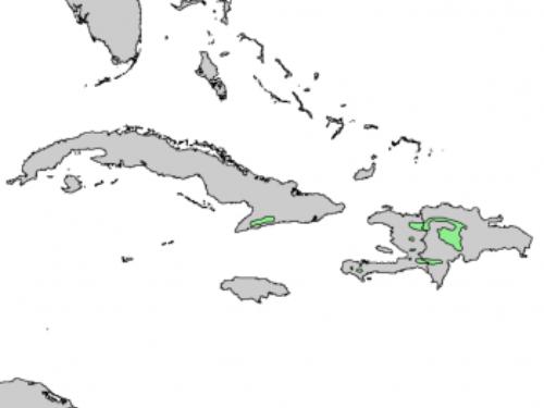 natural range of <em>Pinus occidentalis </em>