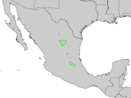 natural range of <em>Pinus pinceana </em>