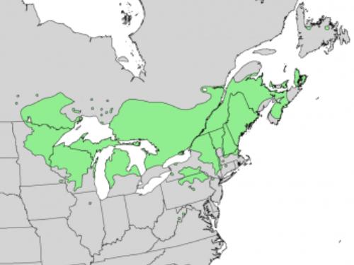 natural range of <em>Pinus resinosa </em>