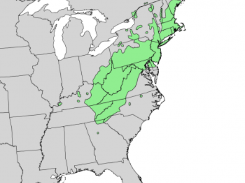 natural range of <em>Pinus rigida </em>