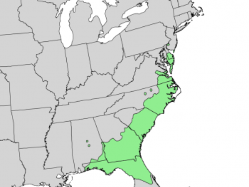 natural range of <em>Pinus serotina </em>