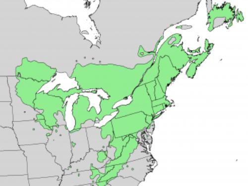 natural range of <em>Pinus strobus</em>