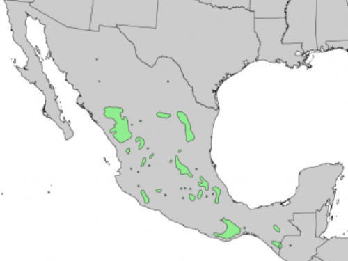 natural range of <em>Pinus teocote </em>