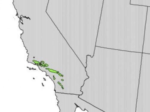 natural range of <em>Psedotsuga macrocarpa</em>