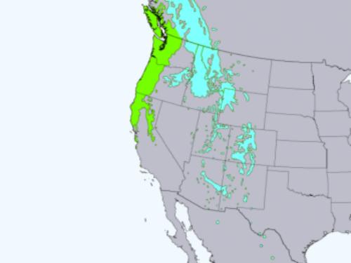 native range of <em>Pseudotsuga menziesii. </em> Green denotes the coastal variety, Blue denoting the interior variety.