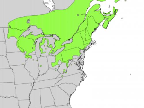 natural range of <em>Taxus canadensis </em>