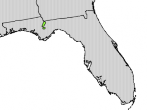 native range of <em>Taxus floridana </em>