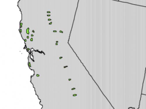 Native range of <em>Torreya californica </em>