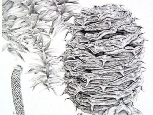 illustration by Heidi Willis (2006)
