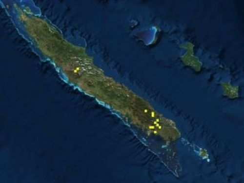 natural range of <em>Libocedrus austrocaledonica </em>