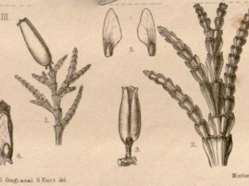 from Missouri Botanical Garden TROPICOS database (2006)