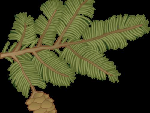 normal_ian-symbol-tsuga-canadensis-branch-350x300.png