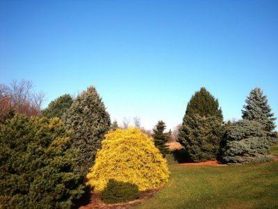 Golden foliage glows at the Bickelhaupt Arboretum
