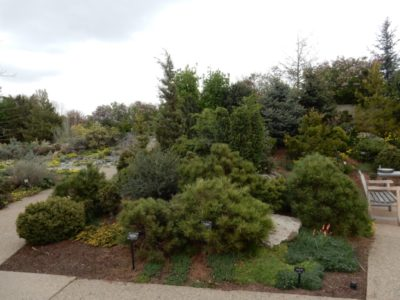 Dwarf Conifer Garden at the Denver Botanic Garden