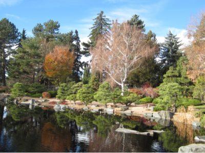 The Japanese Garden at the Denver Botanic Garden