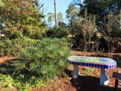 Mahonia eurybracteata 'Soft Caress' next to an inlaid tile bench