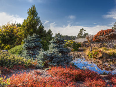 The Gardens in winter