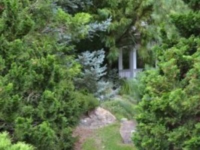 Inside the conifer garden