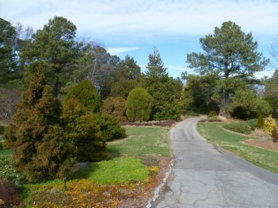 The conifer garden