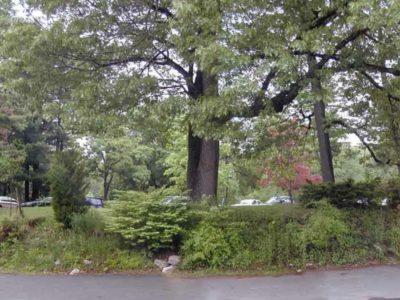 Future site of the Conifer Garden