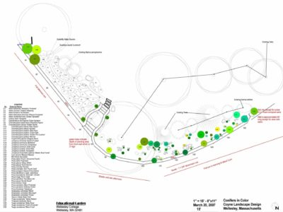 Proposed plantings - green circles represent conifers