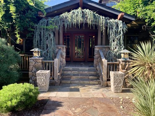 A pair of weeping blue Atlas cedars flanks the front entry of a house in Northern California