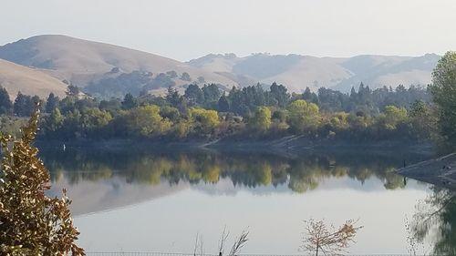 San Francisco Bay Area's Quarry Lakes Park has a wonderful conifer collection