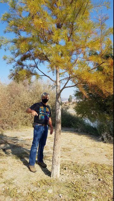 David Pellarin stands next to a Taxodium ascendens