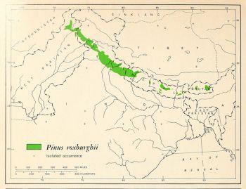 natural range of <em>Pinus roxburghii </em>
