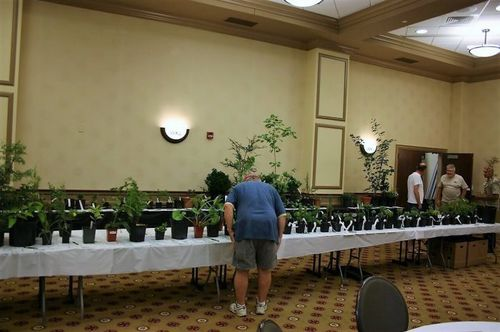 A few coniferites checking to make sure their bids are still winning, between conference events. This is only a small portion of the plants in the auction. Plants on this table include many of the miniature cultivars contributed by Larry Stanley. (Photo by Jeff Harvey)