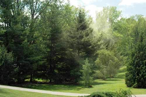 The dust cloud in this photo is actually a sulphur shower of pollen from several white pines. (Photo: Bert Cregg/MSU)