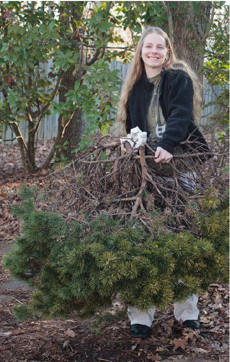 Sarah Montgomery holding the Virginia pine (Pinus virginiana) 'Fluffy Cloud' witch's broom