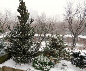 Recent photo of a portion of the Conifer Corner overlooking the Children's Zoo and the skyline of Central Park West beyond.