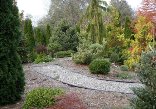 A view of the conifer garden's top of berm, in the West end