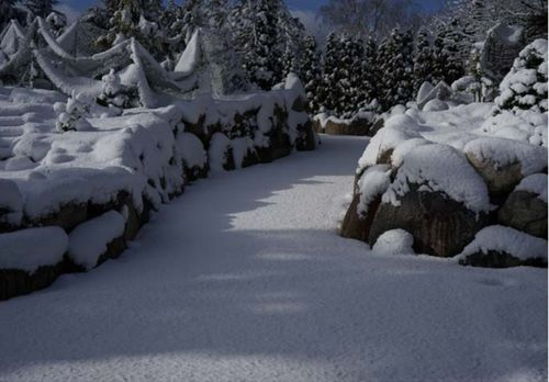 The conifer garden's walkway to bus stop in the winter
