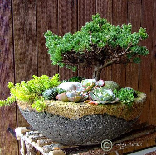 Miniature conifer and succulents in a hypertufa pot. Photo: plantman56.blogspot.com