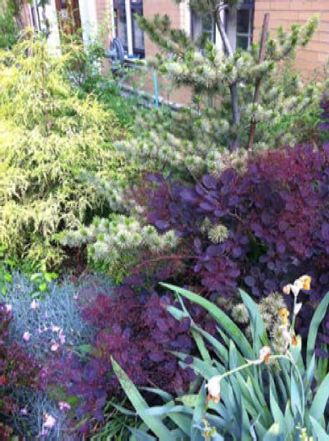 A profusion of conifer colors