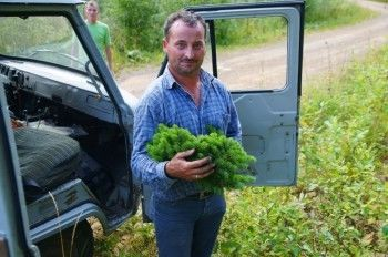 Jӧrg Kohout holding an Abies sibirica witch's broom in the Altai Mountain Range, Kazakhstan