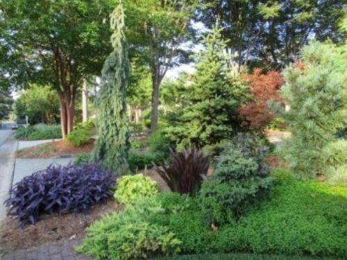 The garden of Harrison Tuttle, photo by the Harveys