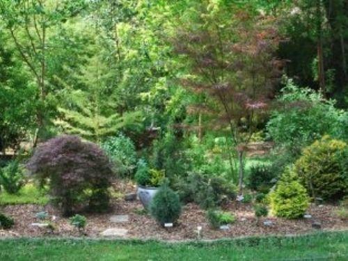 The garden of Sandy Horn, photo by Sandy