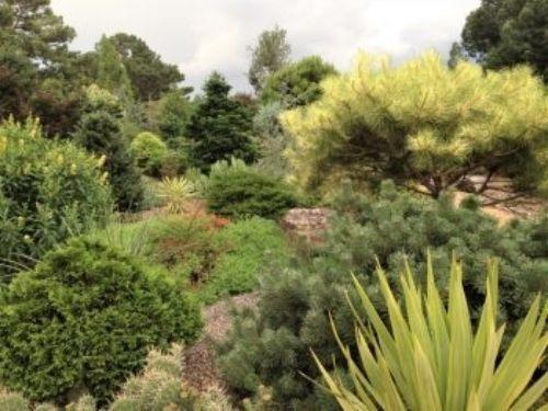 The Unique Plant garden