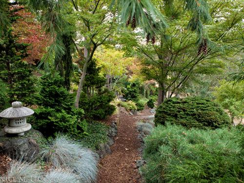 The magnificent woodland garden of Ken and Elena Jordan